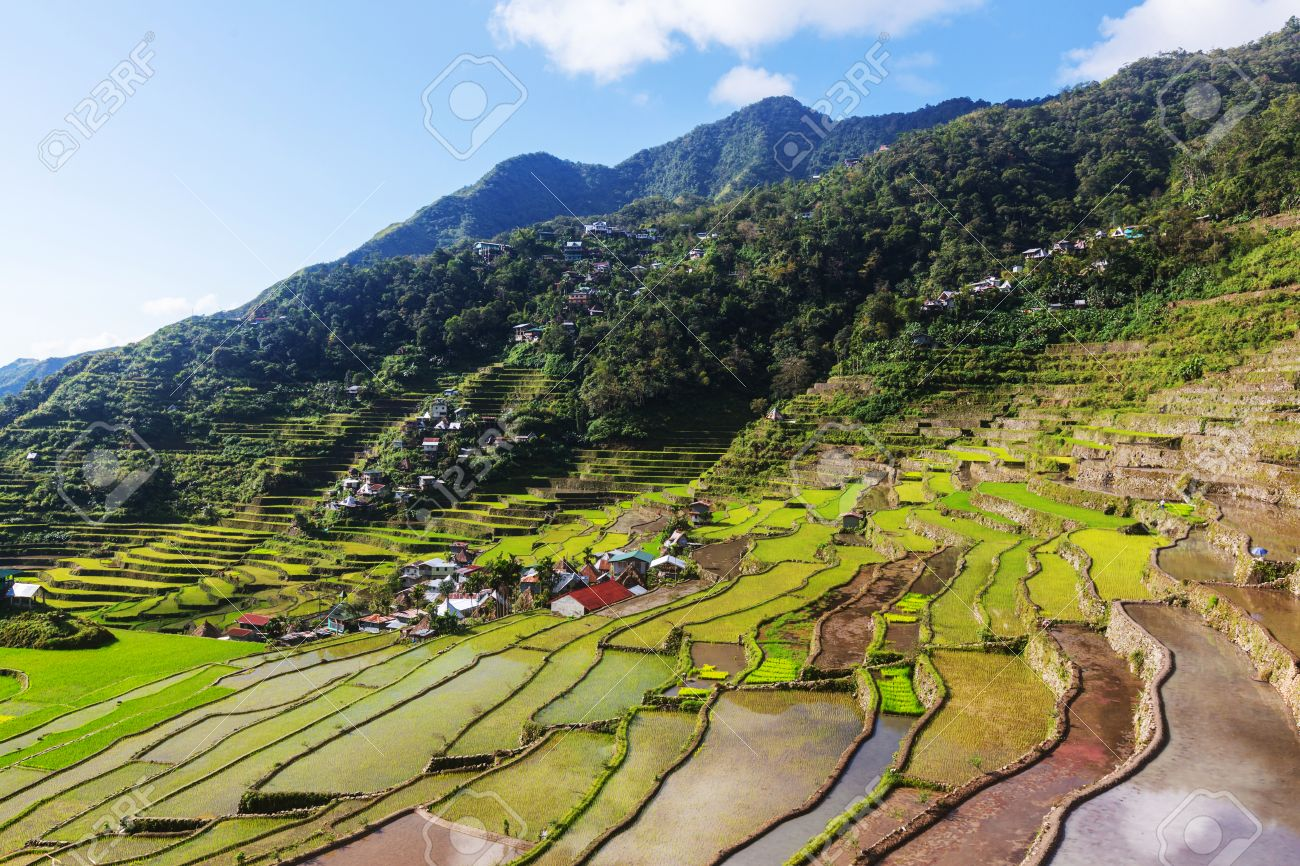 Hermoso Verde Terrazas De Arroz En Las Filipinas El Cultivo Del Arroz En La Isla De Luzón