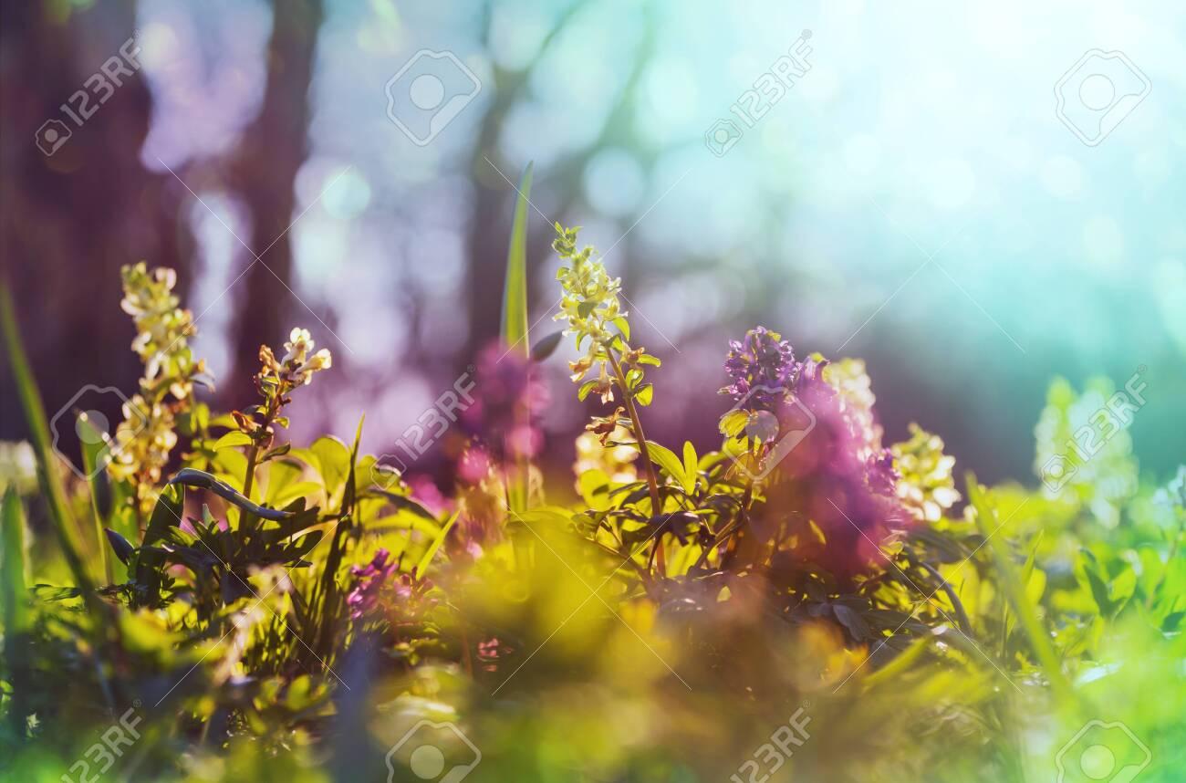 Beautiful garden spring flowers. Natural background. - 125331434