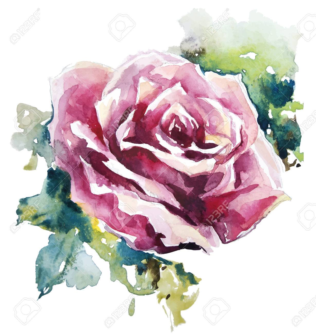 watercolor rose flower painting royalty free cliparts vectors and