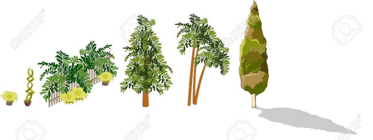 A Lot Of Kinds Of Trees Palm Plants Flowers On White Background