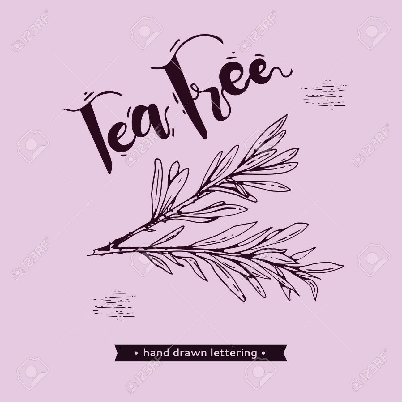 Branches with leaves of tea tree with lettering tea tree. Detailed hand-drawn sketches, vector botanical illustration. For menu, label, packaging design. - 156339359