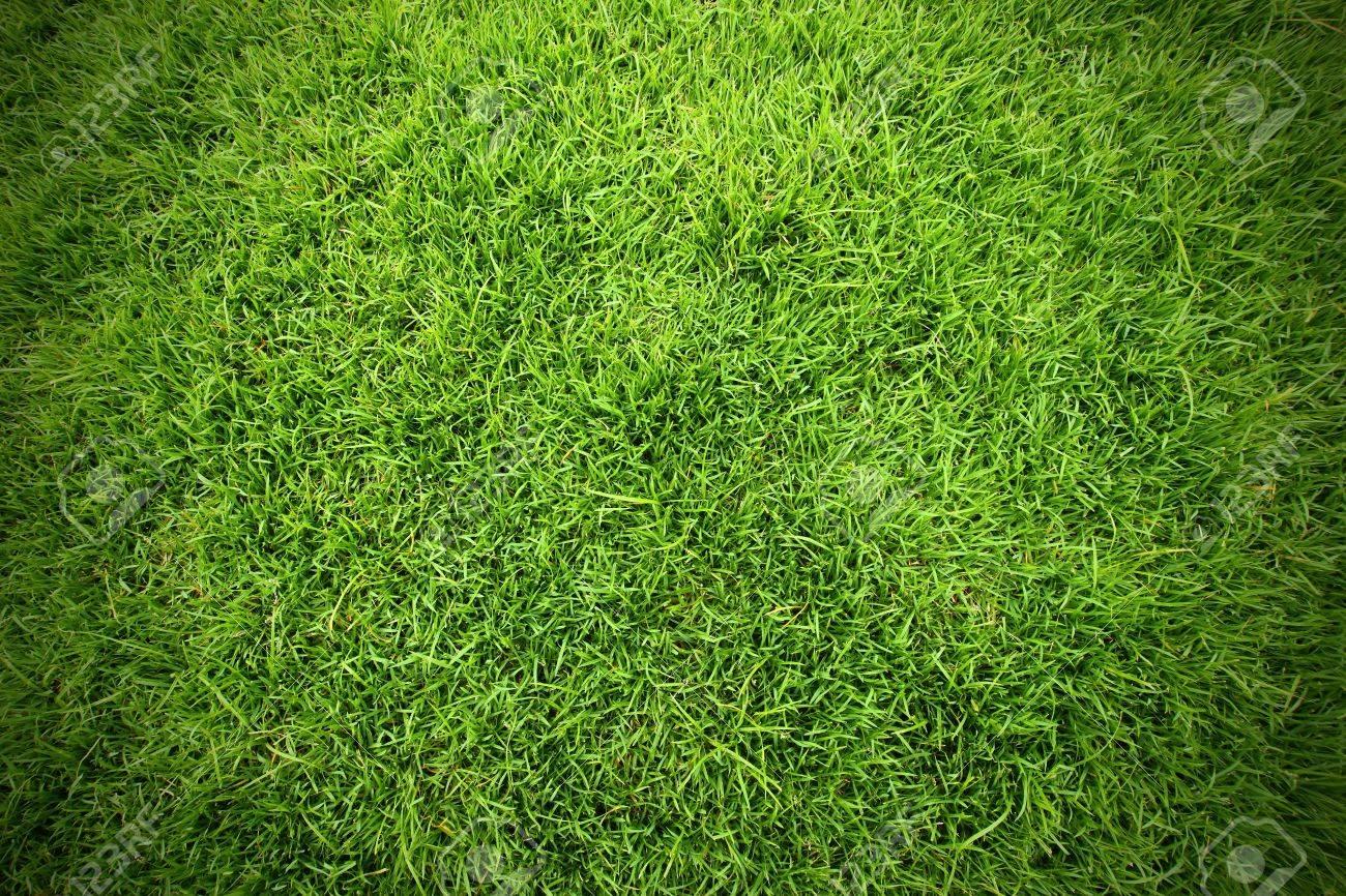 Green field of grass background - 17792846