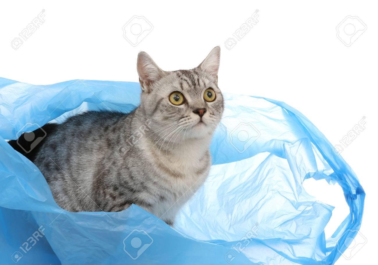 Portrait of gray shothair cat looking something in plastic bag - 27993864