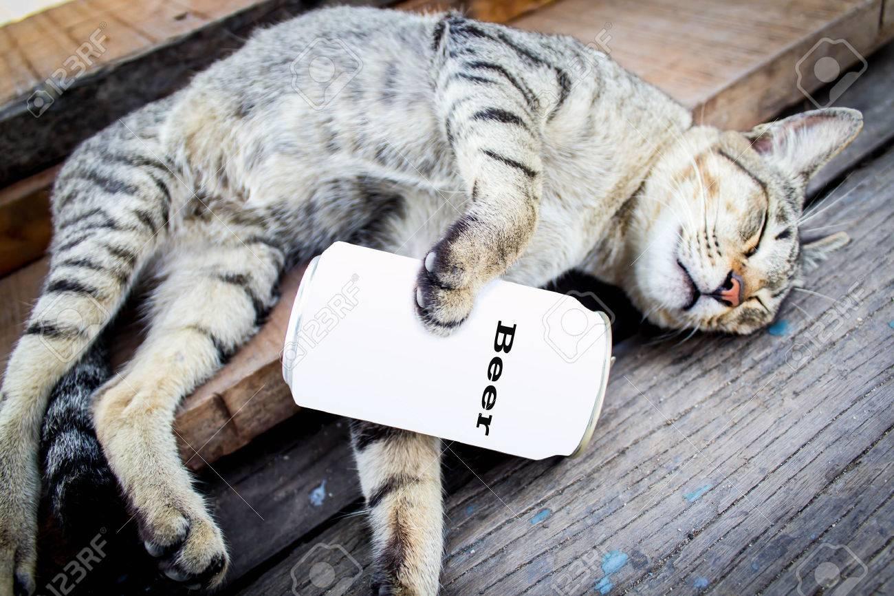 Immagini Stock Il Gatto Che Dorme Su Un Pavimento Di Legno Perché