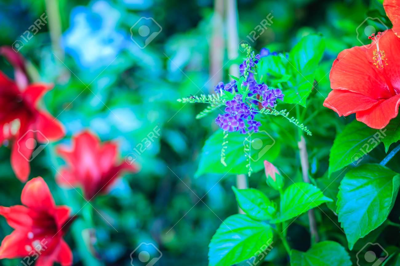 Duranta Erecta Flores De Color Purpura Entre Flores Rojas Los