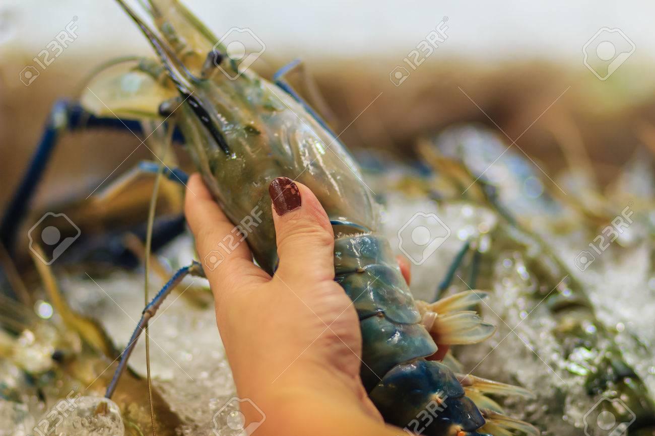 Extra large size of giant malaysian prawn (Macrobrachium rosenbergii)