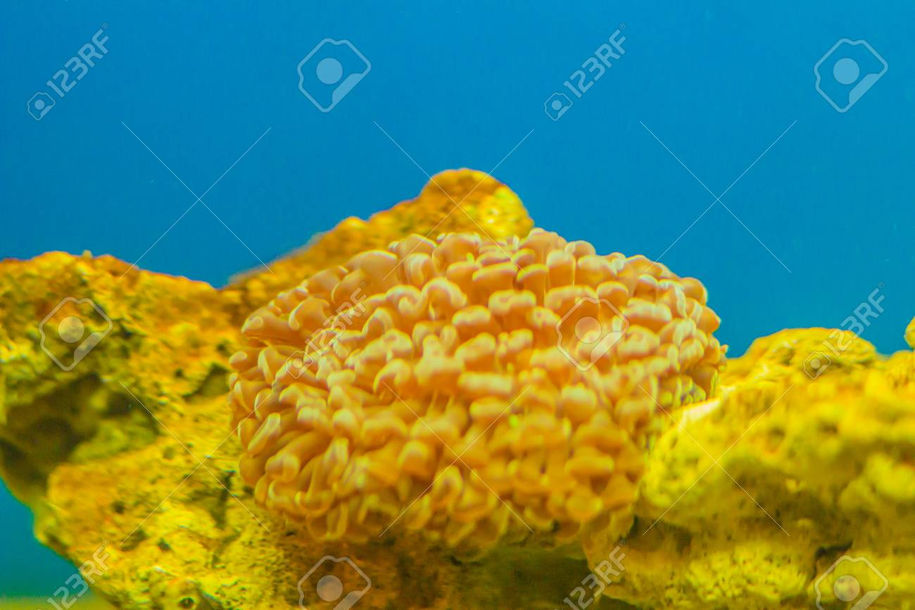 Colorful Underwater Coral Reef In Aquarium Underwater World