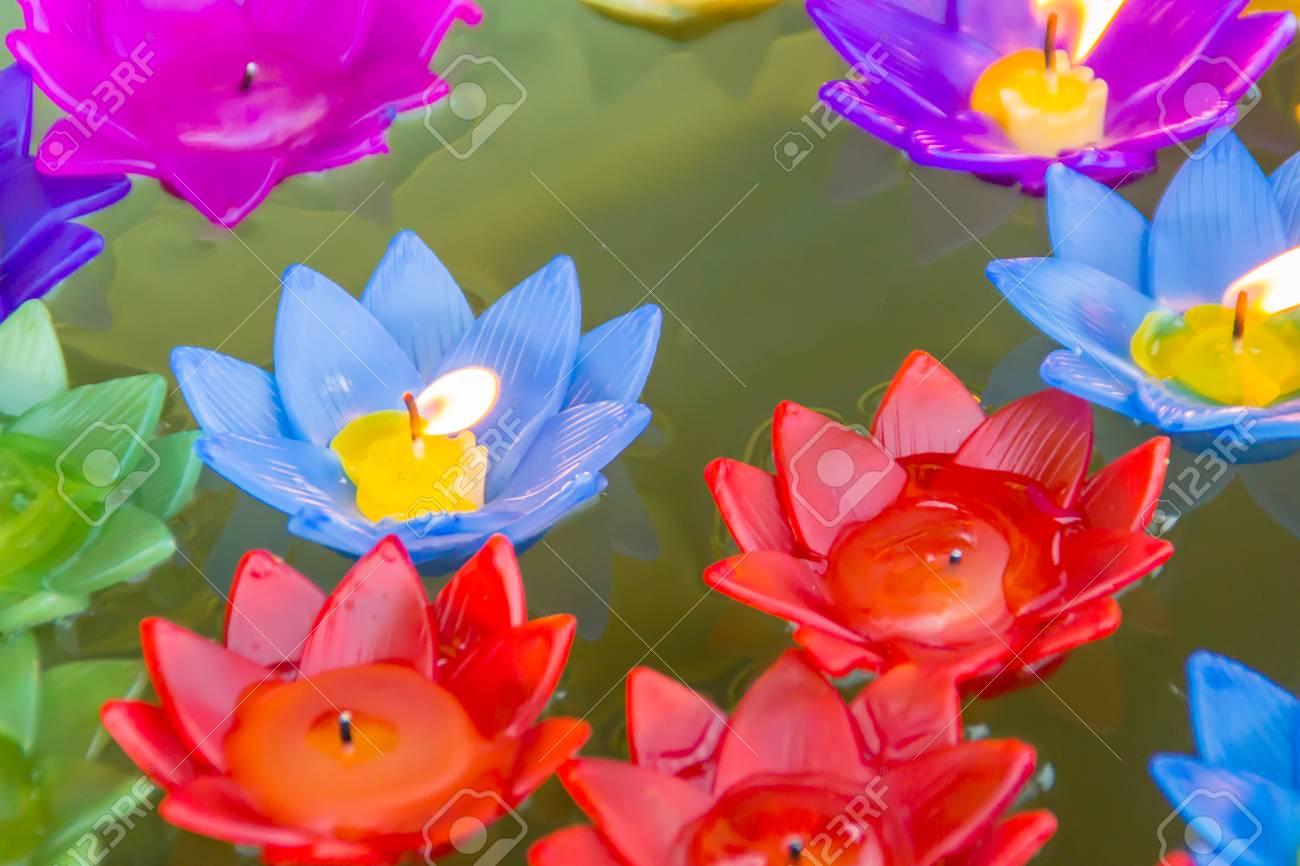 Colorful Lotus Flowers Image collections - Flower Decoration Ideas