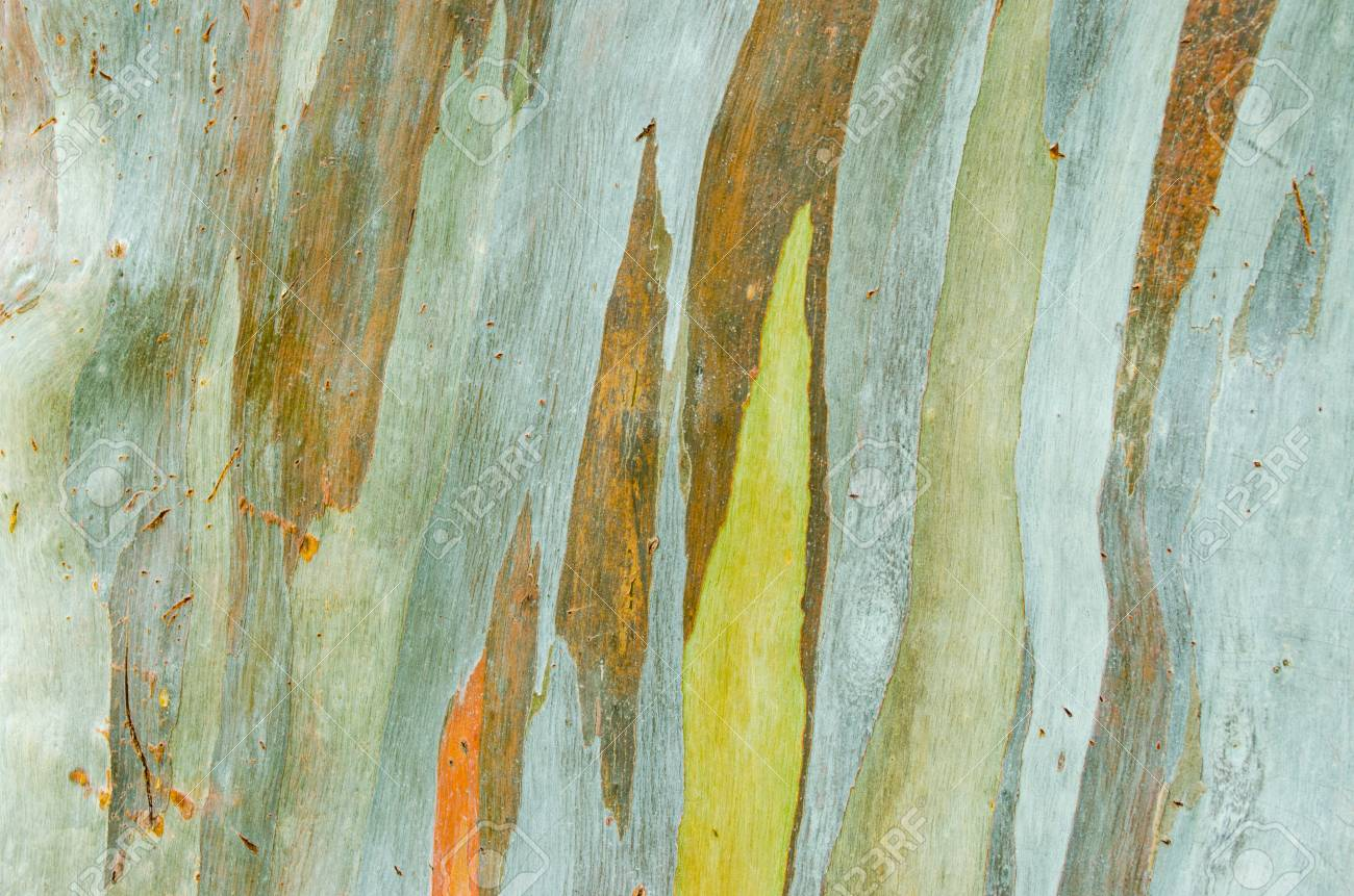 Colorful Abstract Pattern Of Eucalyptus Deglupta Tree Bark Stock ...