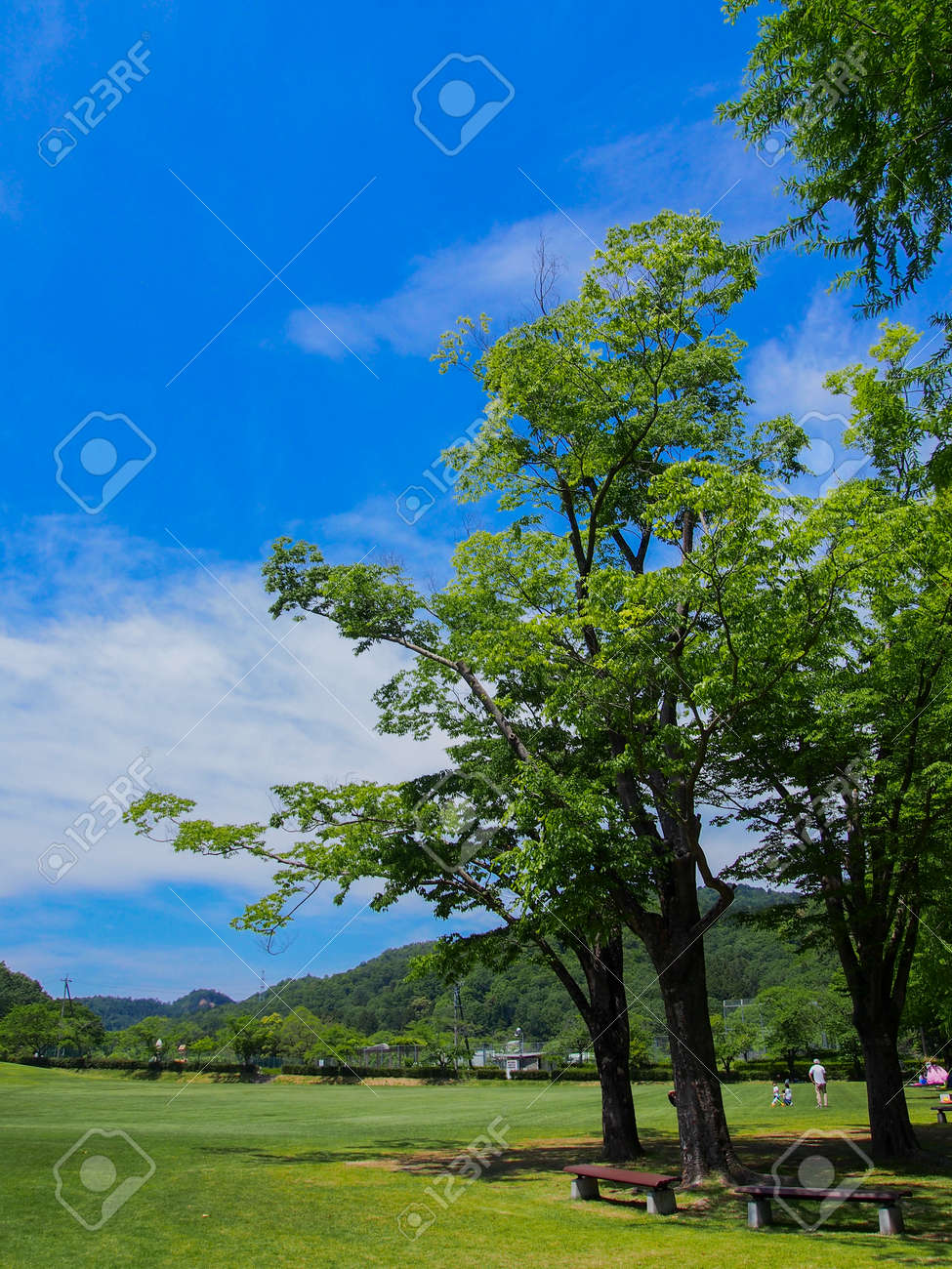 A sunny Japanese park with lots of greenery - 155758586
