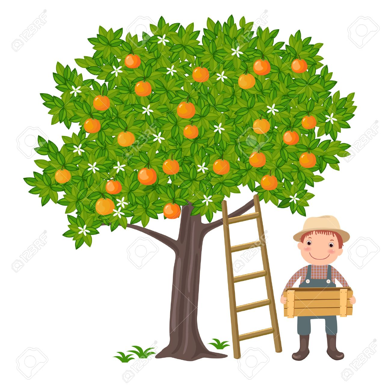 A vector illustration of a cute boy picking oranges from the tree - 40625044