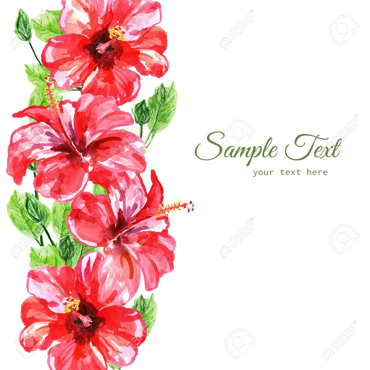 Frame From Red Watercolor Hibiscus Flowers Illustration Isolated On