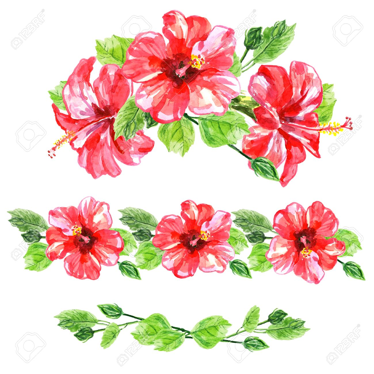 Set Of Red Watercolor Hibiscus Flower Illustration Isolated On