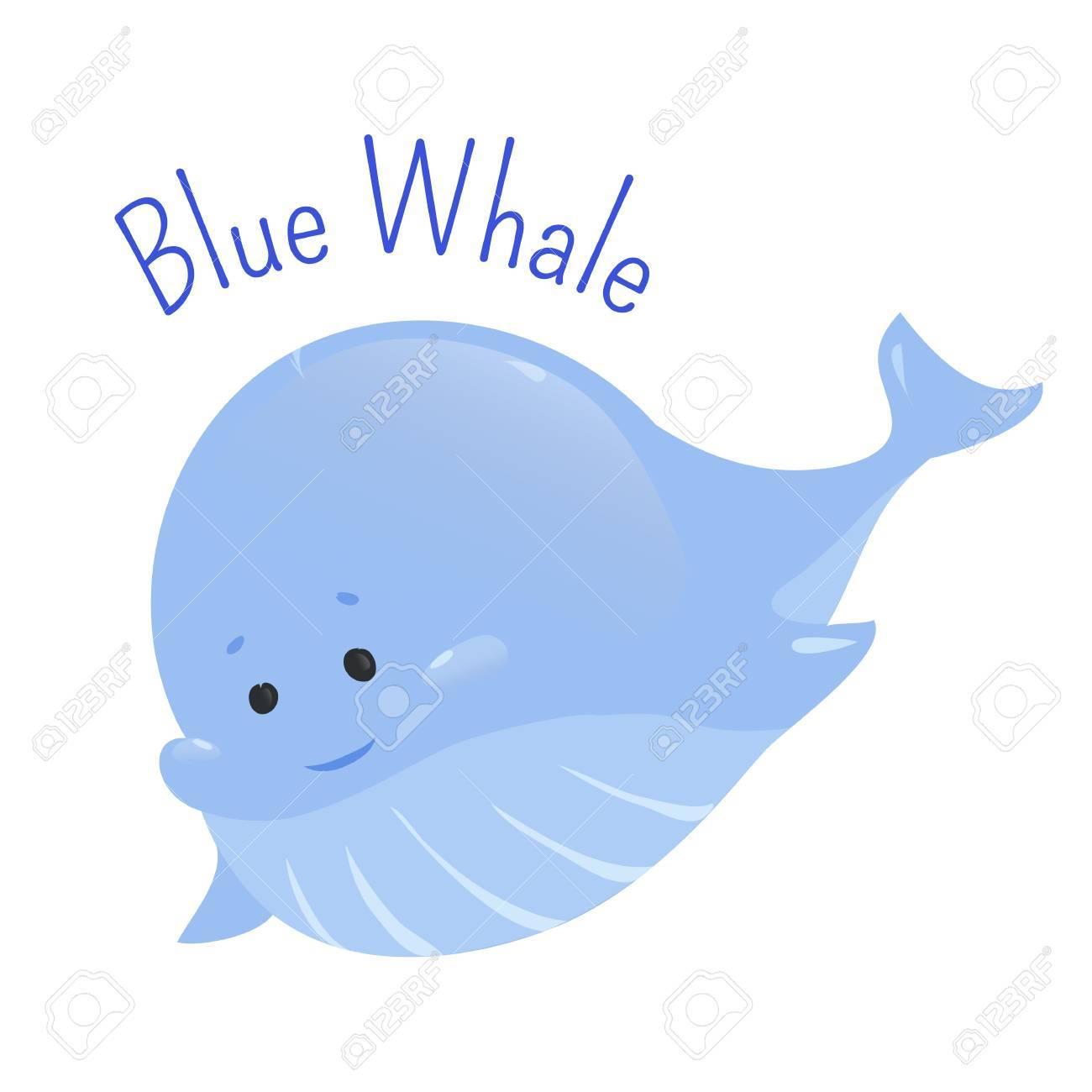 Blauwal Auf Weißem Hintergrund. Balaenoptera Musculus ...