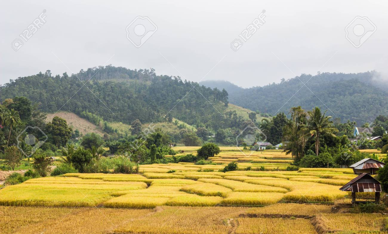 The Hut In The Gold Field Maelanoi Thailand Stock Photo Picture And