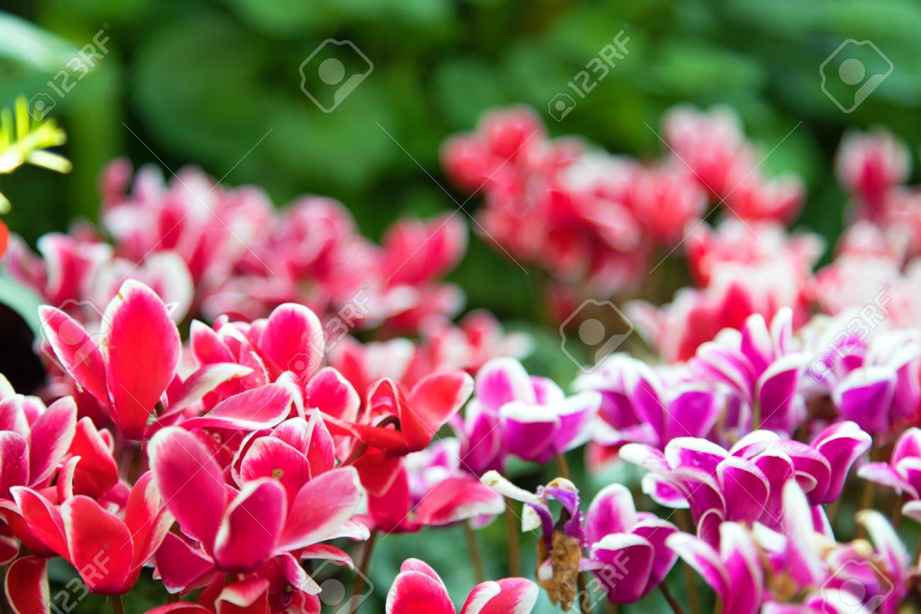 Beautiful flower background amazing view of bright colorful stock beautiful flower background amazing view of bright colorful flowering in the garden at the middle izmirmasajfo