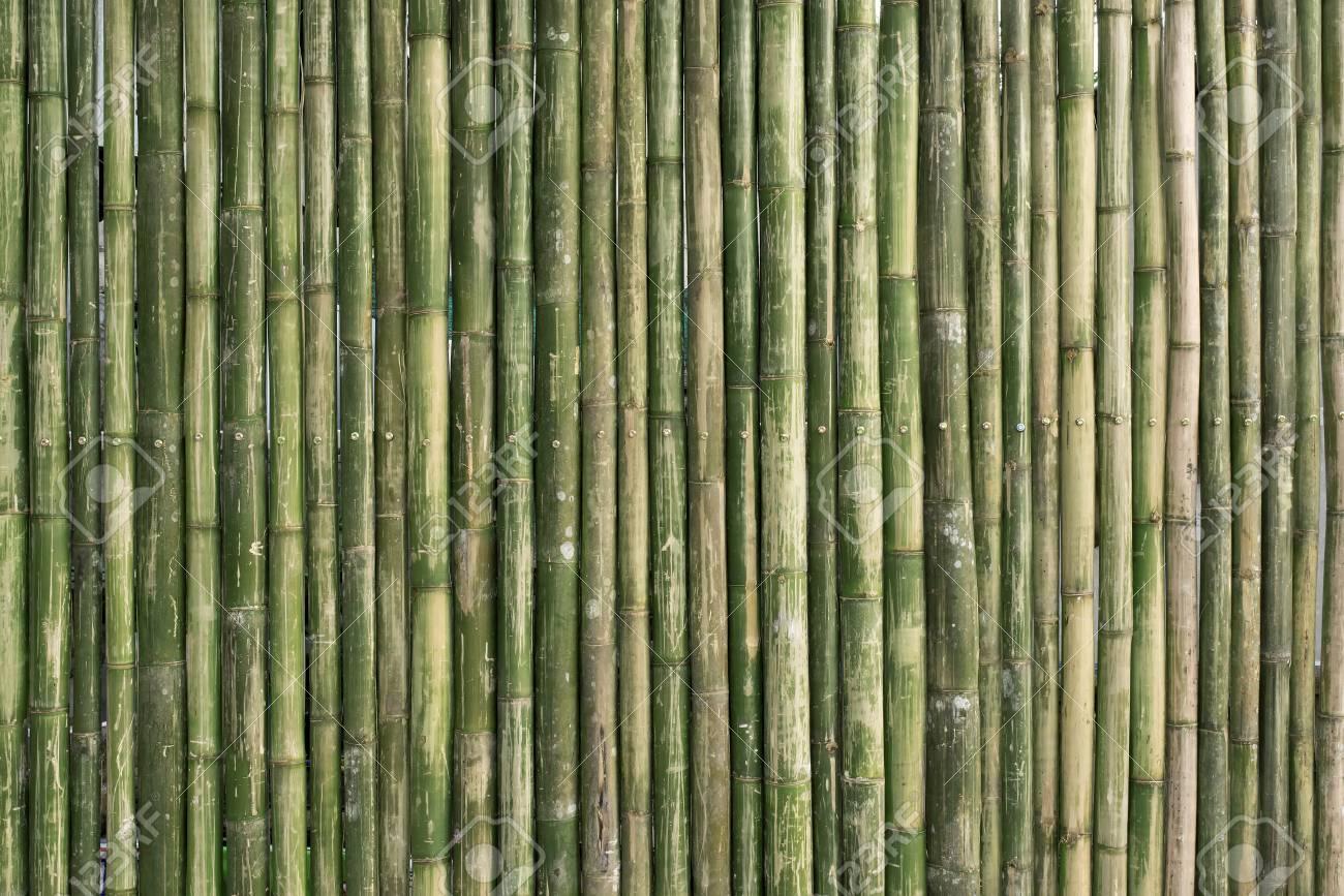 grün bambuszaun hintergrund lizenzfreie fotos, bilder und stock