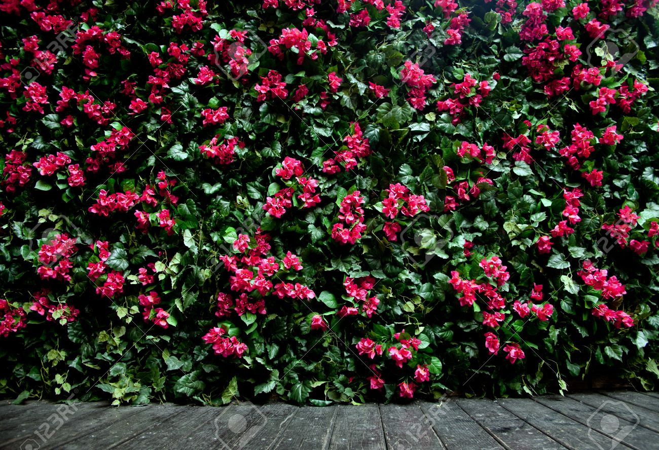 Flower Wall Oleander Flower Wall With Colored Tiles Stock Photo Picture And