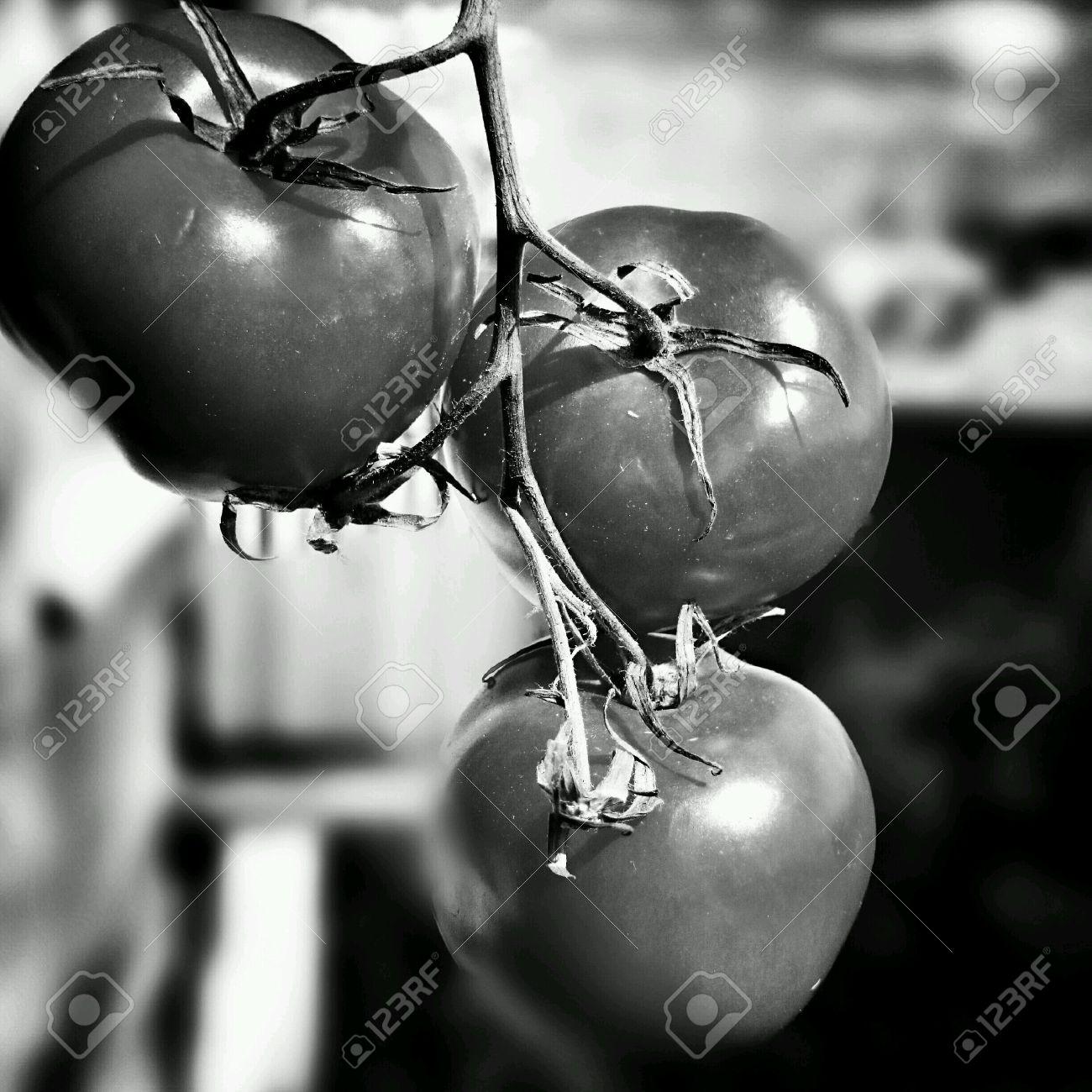 Tomate Rojo Mirada Artística En Blanco Y Negro Fotos Retratos