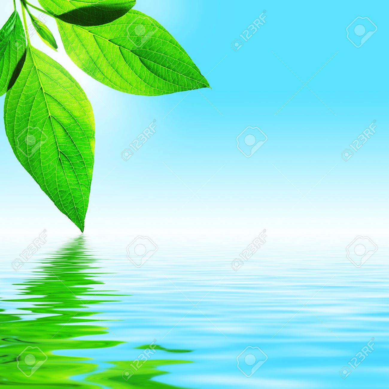 fresh leaf, blue sky and shine water surface (blank space for text) - 1192469