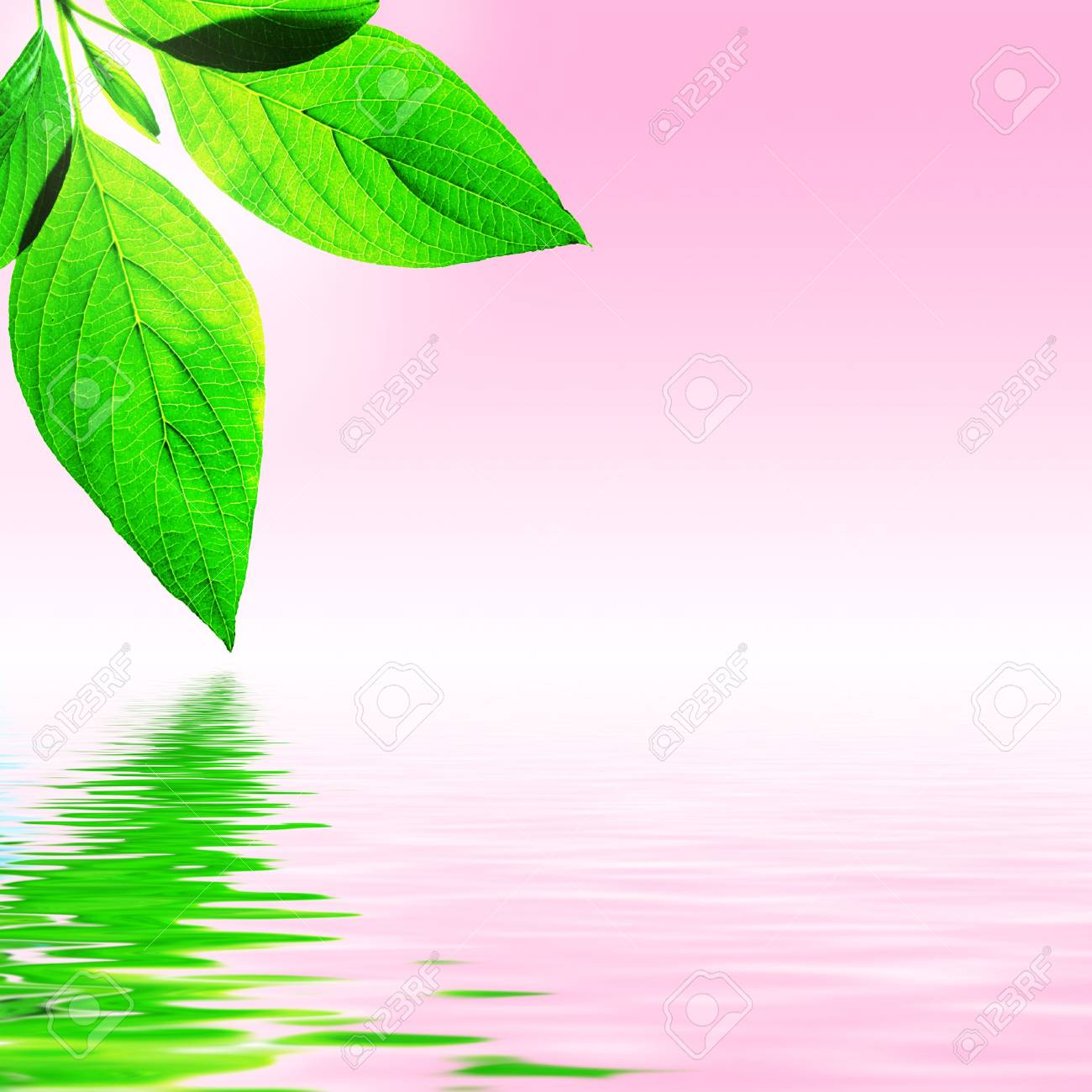 fresh leaf, pink sky and shine water surface (blank space for text) - 1192508