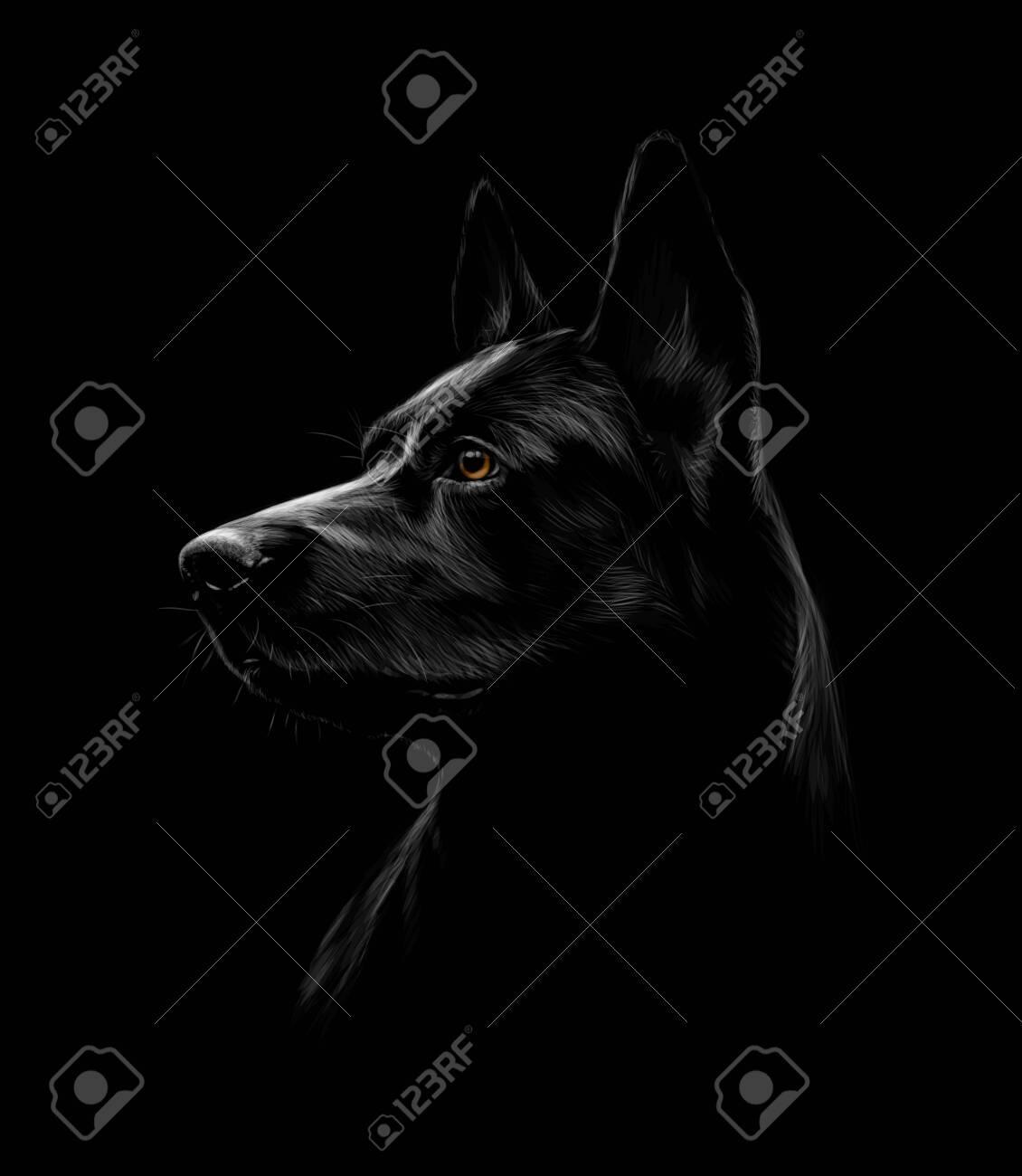 Portrait of a black shepherd dog on a black background - 122572889