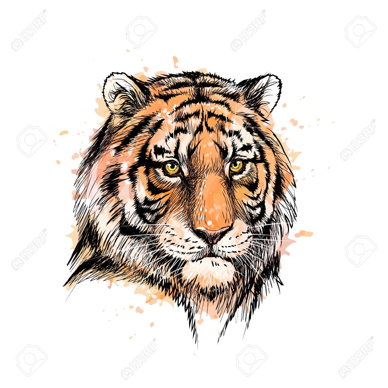 Portrait of a tiger head from a splash of watercolor - 130825664