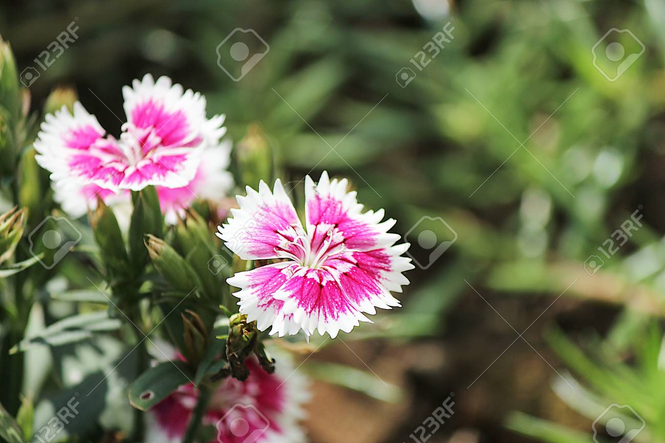 The flower in the Thailand Stock Photo - 16750202