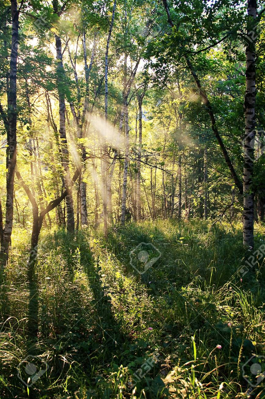 Forest Stock Photo - 8311390