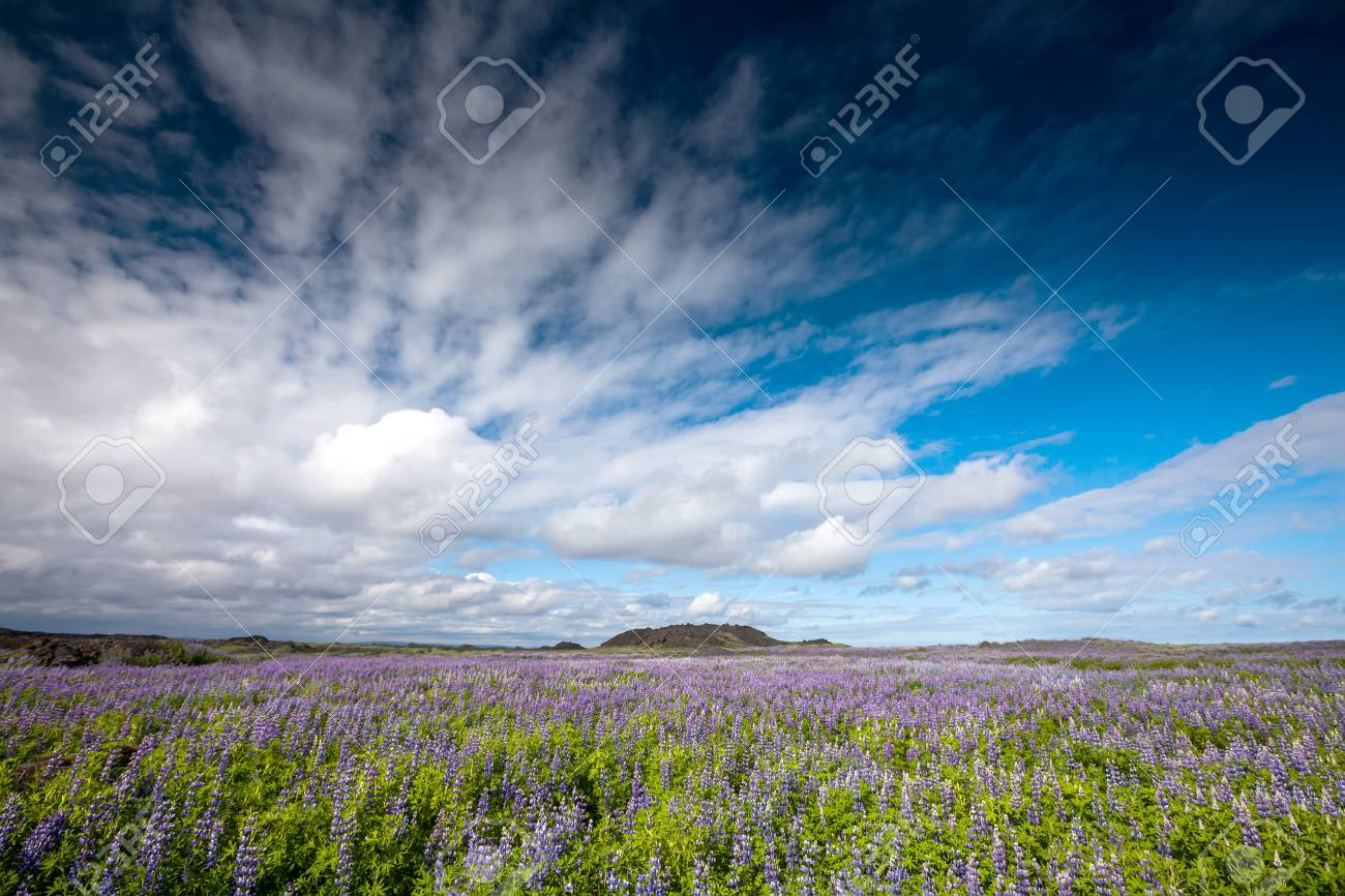 View at Icelandic plains during summertime - 68156030