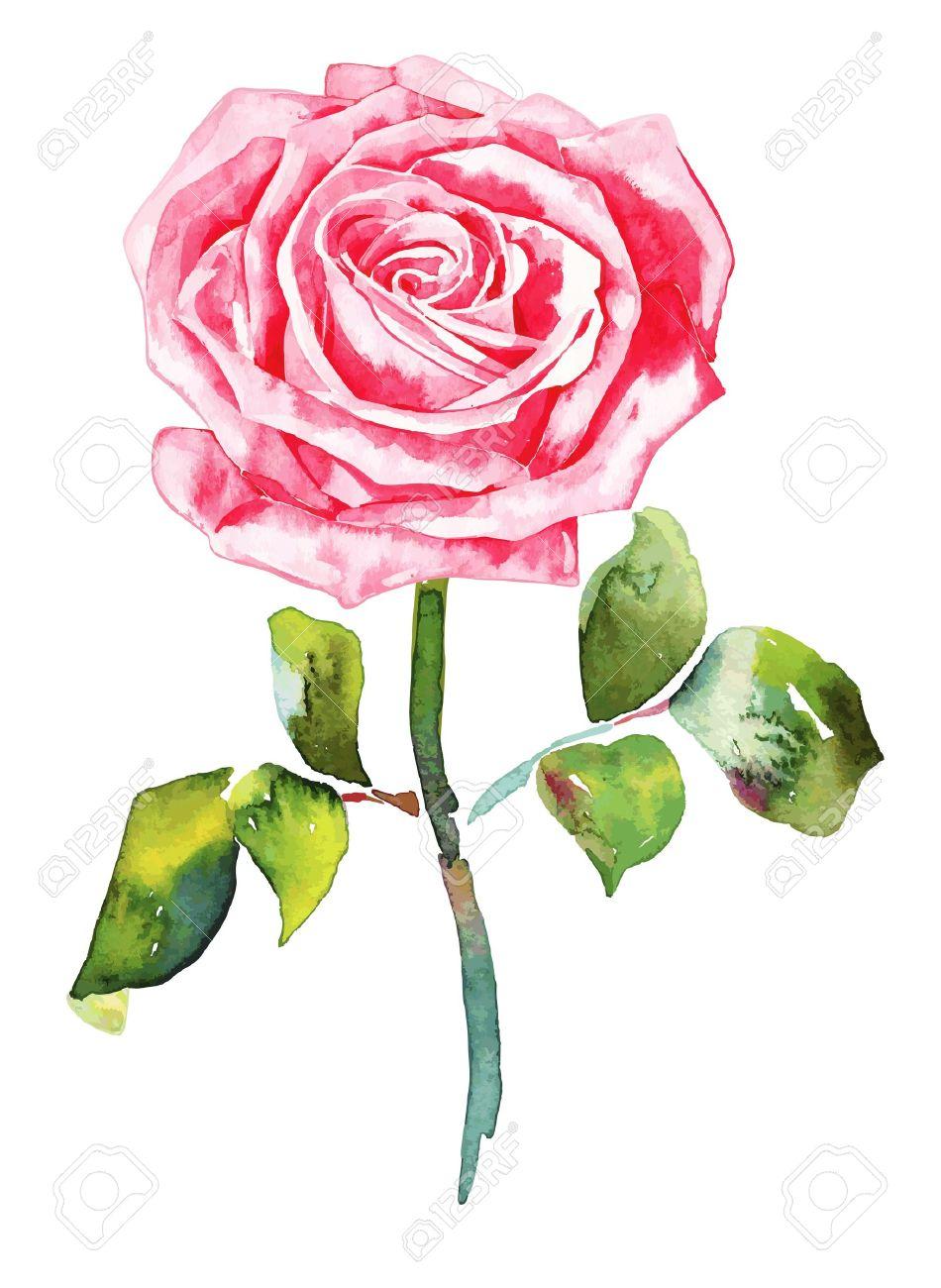 romantic watercolor  rose Stock Vector - 13237375