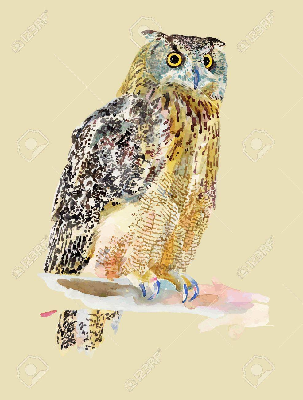 watercolor painting of bird, owl  I am author of this illustration Stock Vector - 13756716