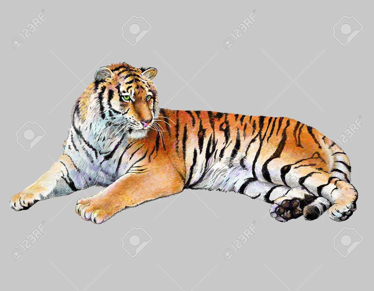 scetch colored drawing realistic illustration of tiger, isolated, vector version - 19894548