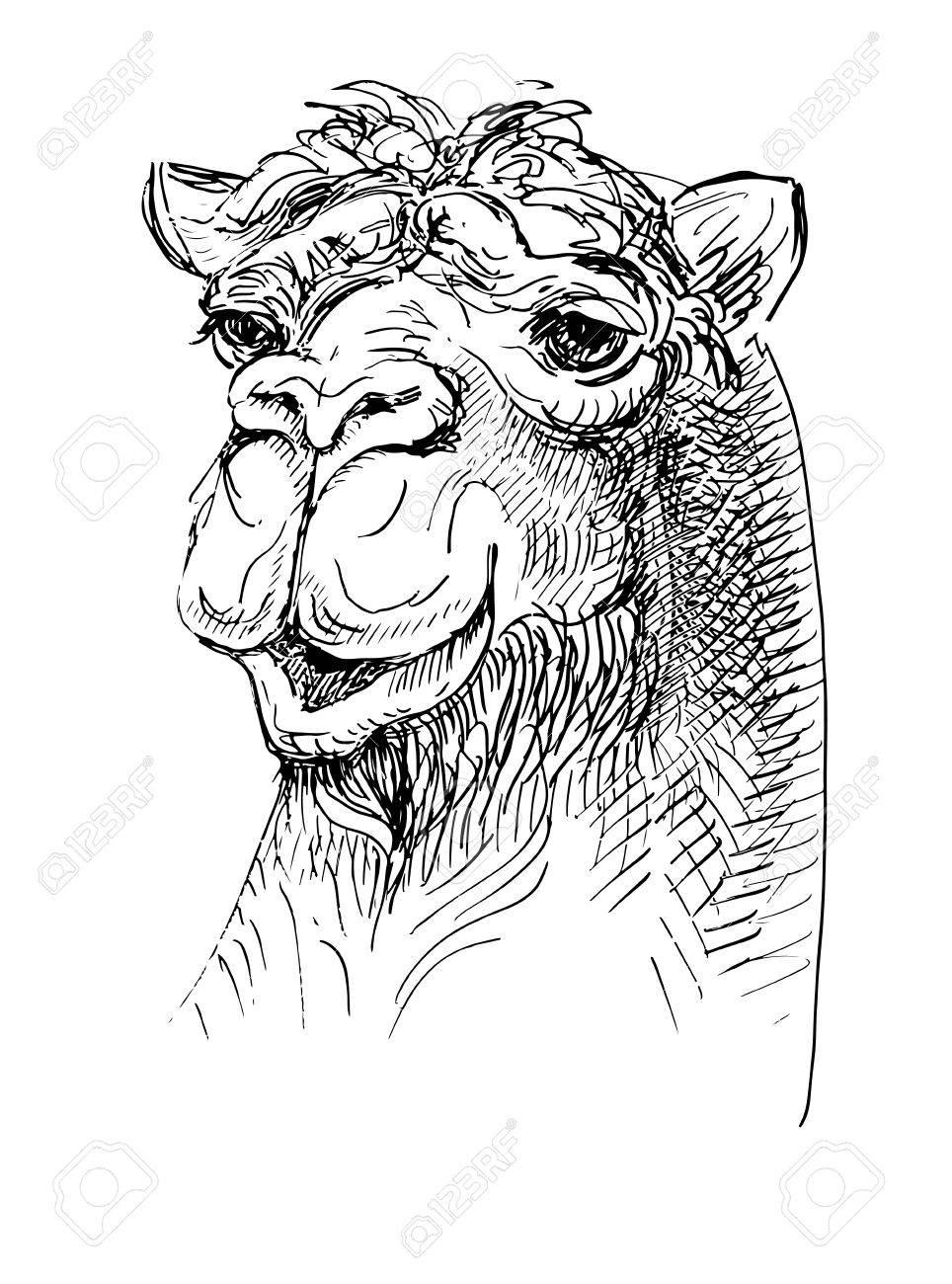 Illustration Chameau Croquis Dessin Noir Et Blanc De Réaliste Animal De Tête Isolé Sur Fond Blanc