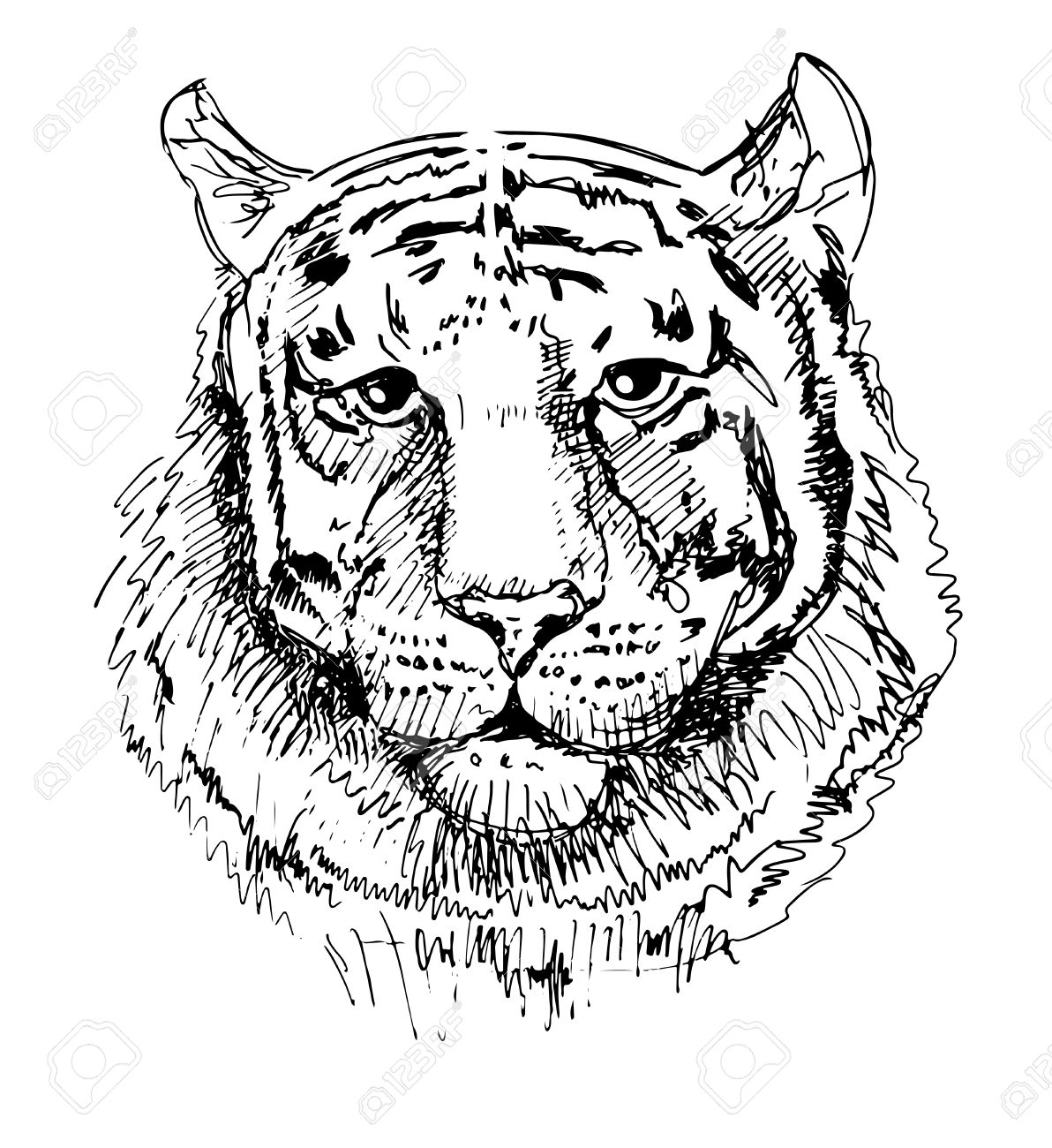 Motifs Tigre Croquis Dessin En Noir Et Blanc Isolé Sur Fond Blanc Animaux De Tête Illustration Vectorielle