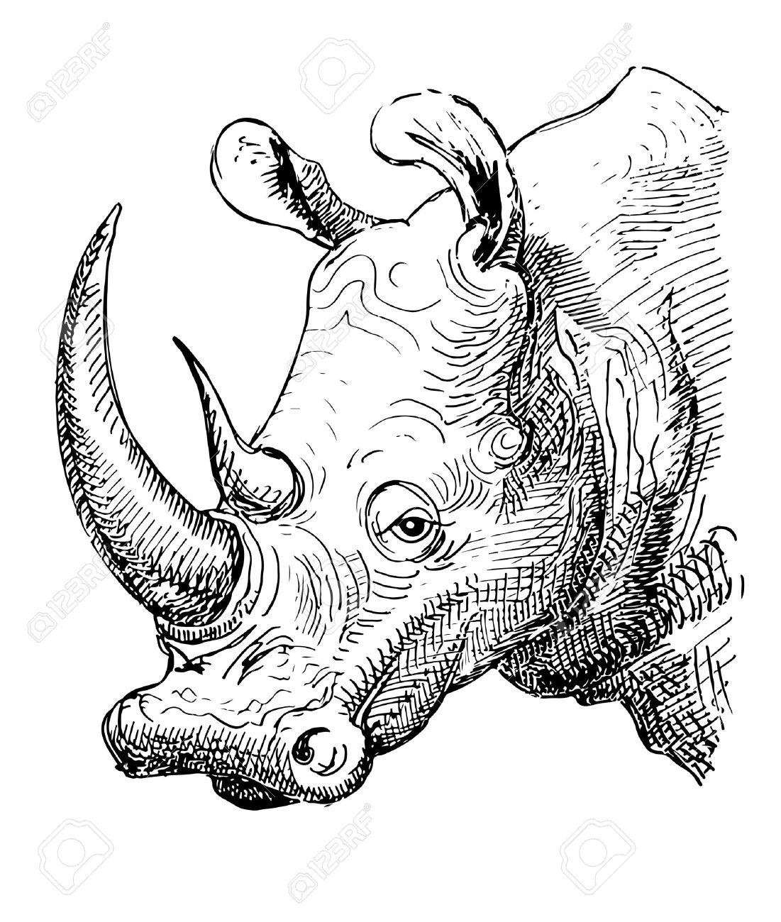 Rhinocéros D Illustration Croquis Dessin Noir Et Blanc De Réaliste Animal De Tête Isolé Sur Fond Blanc