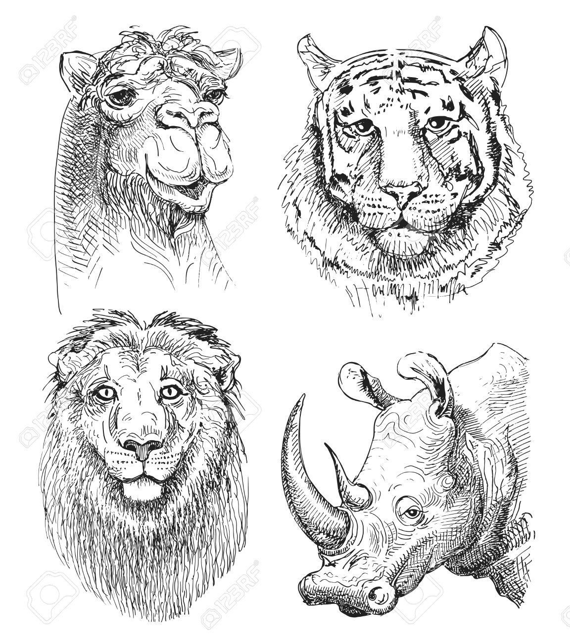Set Of Safari Head Animals Black And White Sketch Drawing Of