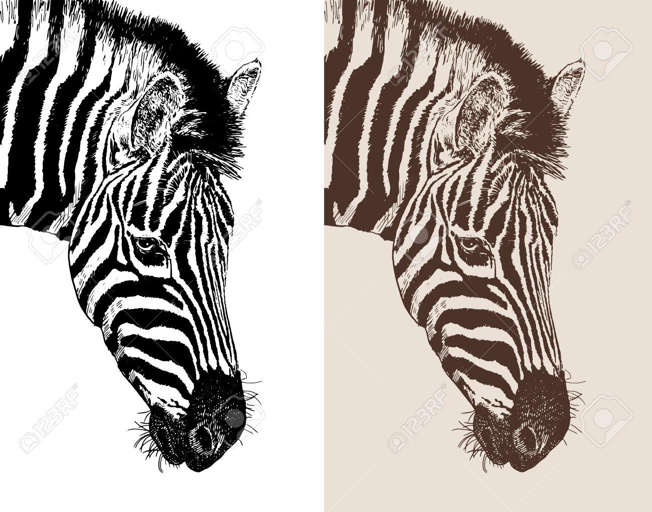 Tête D Illustration Profil Zèbre Croquis Numérique De L Animal Réaliste Dessin Noir Et Blanc Et La Version Sépia Isolé Sur Fond Blanc Illustration