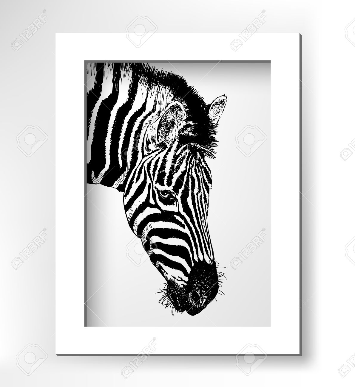 Kunstwerk Kopfprofil Zebra, Digitale Skizze Tier, Realistisch ...