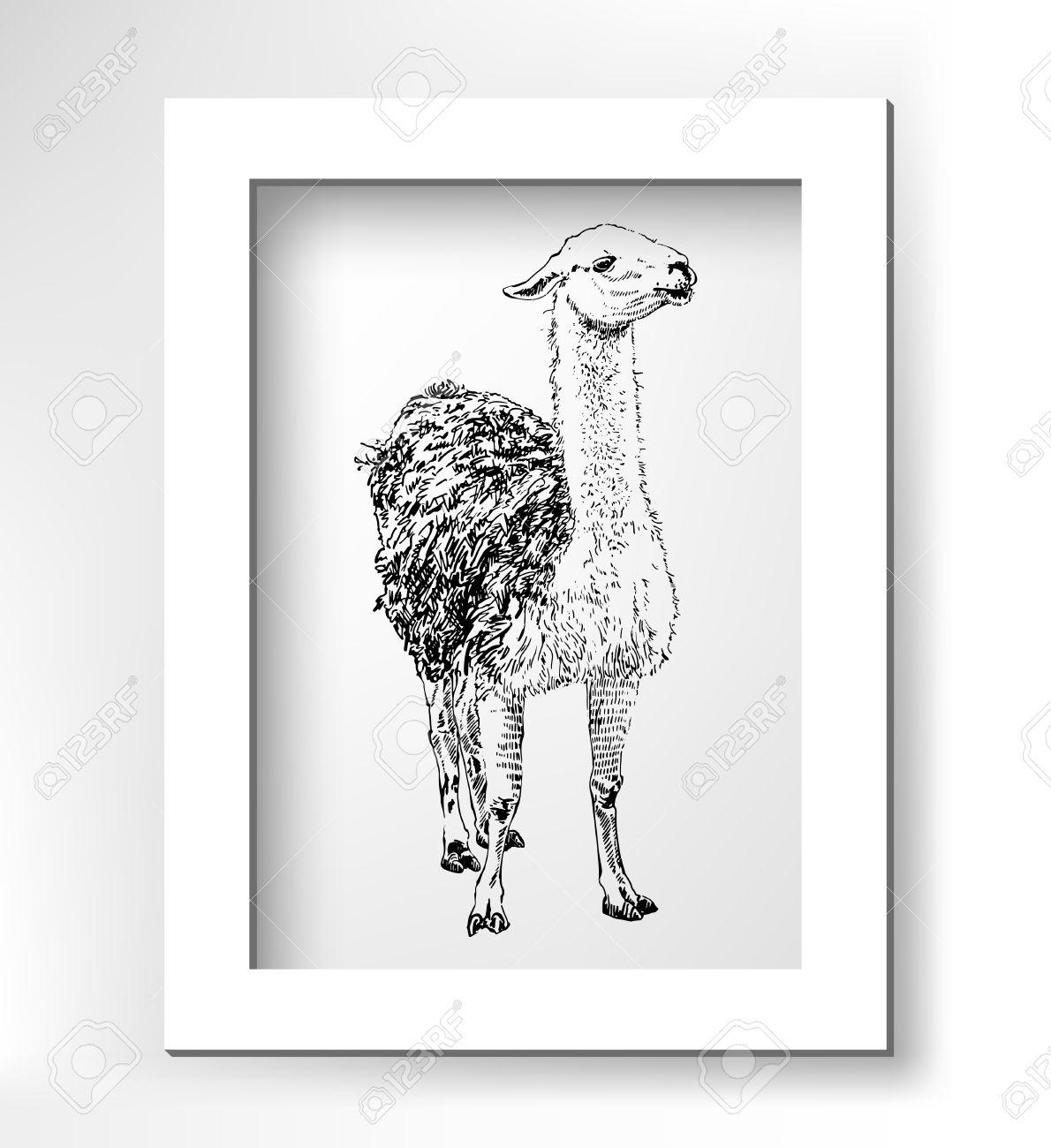 Kunstwerk Lama, Digitale Skizze Tier, Realistisch Schwarz Zeichnung ...