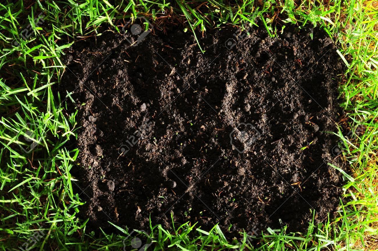 Black soil. Stock Photo - 7356793