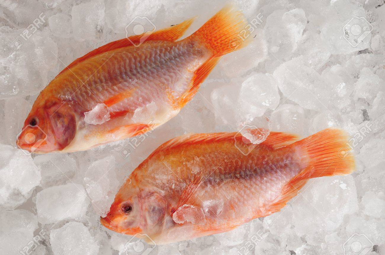 Frozen fish Stock Photo - 16430152