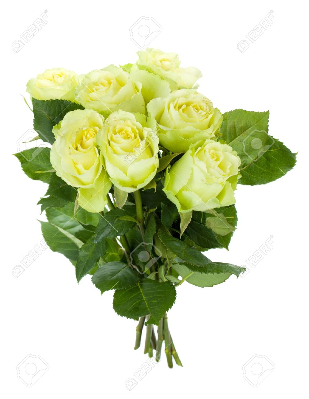 Green Roses Bouquet Isolated On White Background Stock Photo Picture And Royalty Free Image Image 12448437
