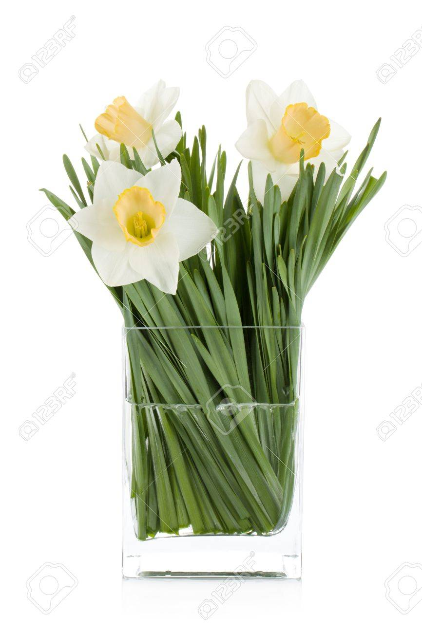 White daffodils in glass vase. Isolated on white background Stock Photo - 13566161