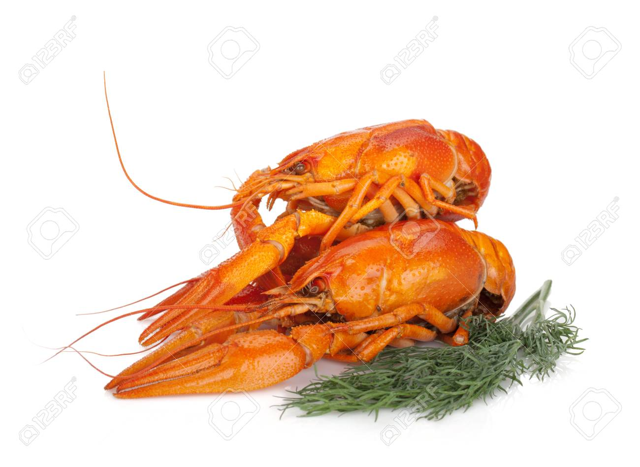 Boiled crayfishes with dill  Isolated on a white background Stock Photo - 15372613