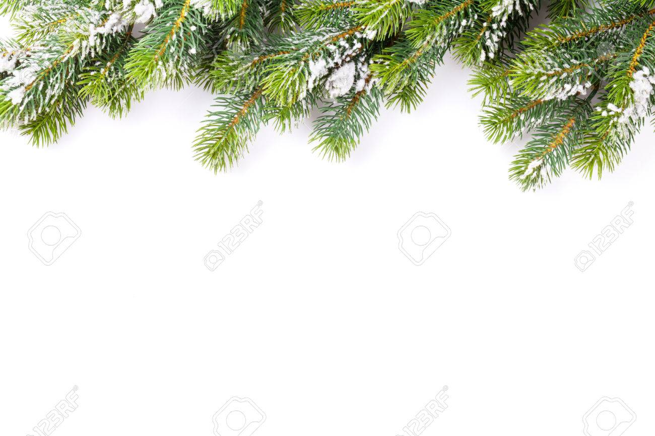 Christmas tree branch with snow. Isolated on white background with copy space - 45811876