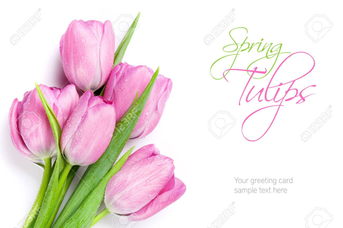 Fresh pink tulip flowers bouquet. Isolated on white background with copy space - 55372752