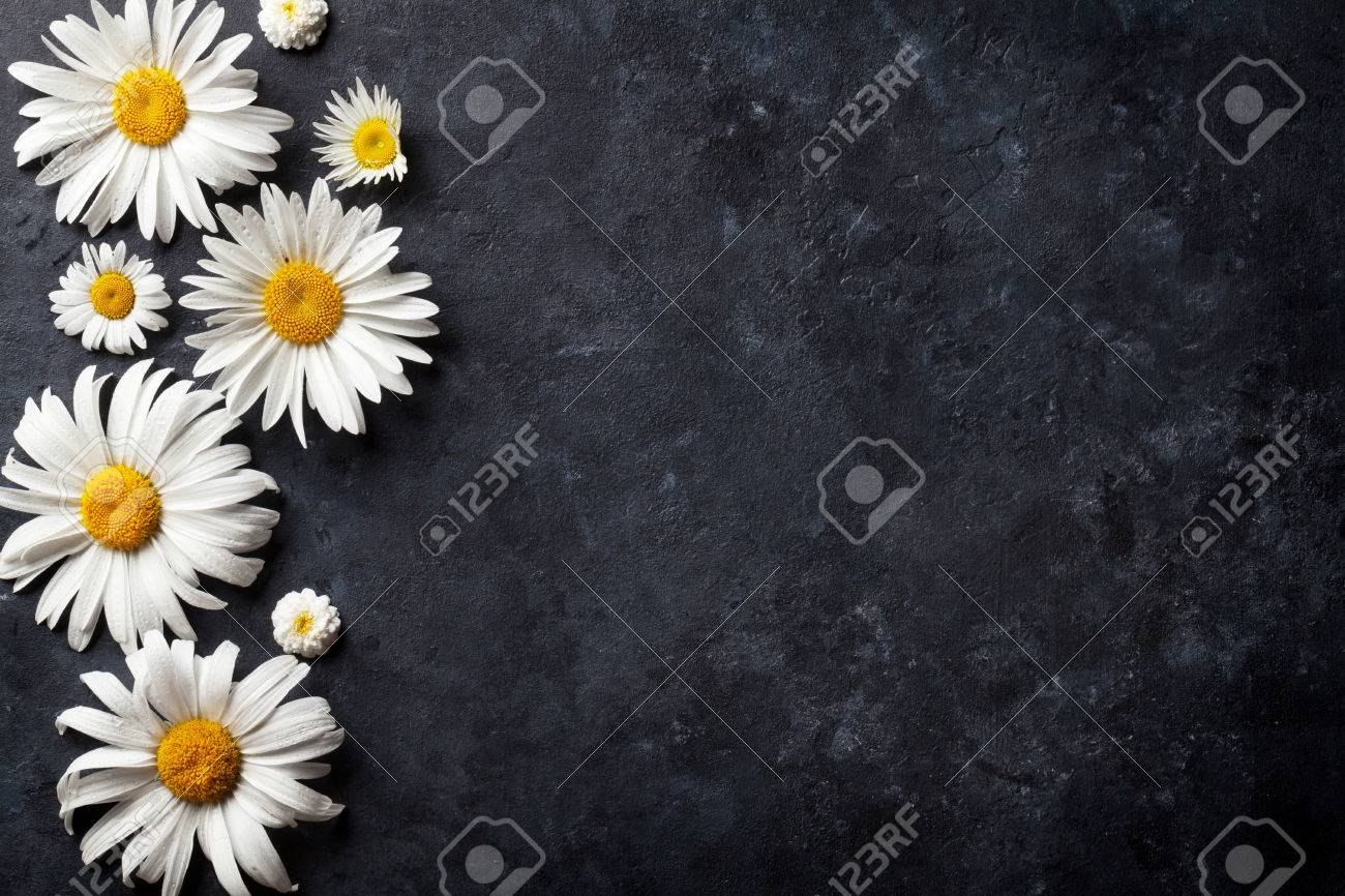 Garden chamomile flowers over stone table background. Backdrop with copy space Standard-Bild - 60455255