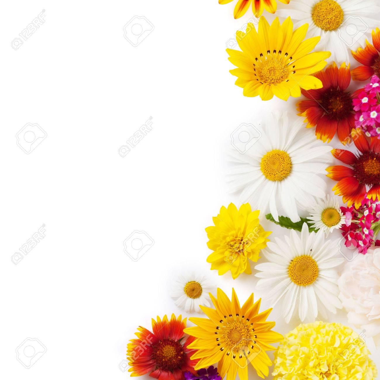 Marco De Flores De Jardín. Aislados En Fondo Blanco. Fondo Con Copia ...