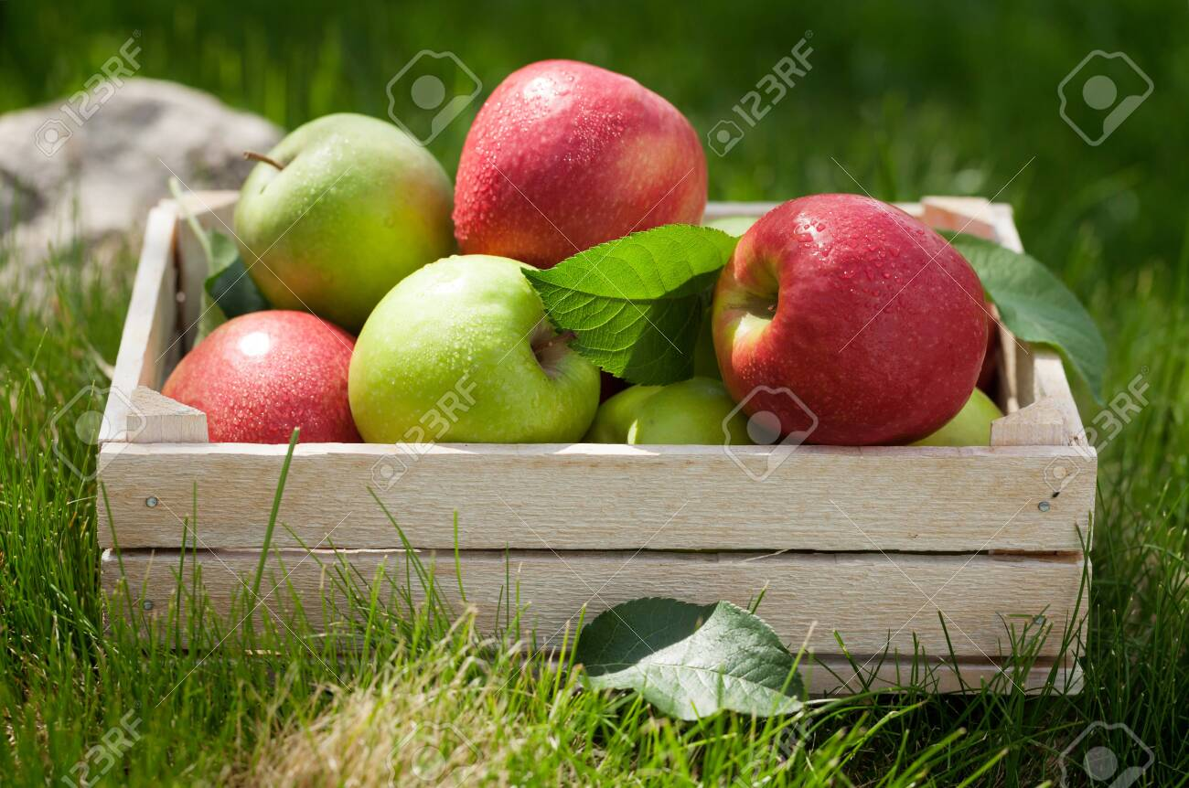 Fresh garden green and red apples in box. On outdoor grass meadow - 128199631
